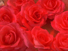 Rosenöl Kosmetik